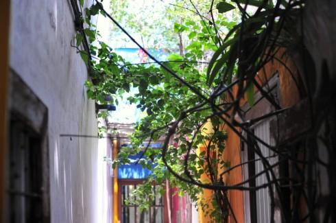 tree-street-mcm_4039-840x558